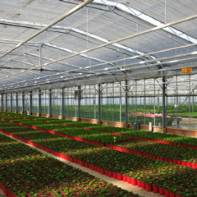 Greenhouse Cooling and Humidification